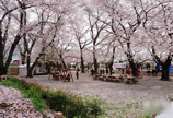 韩国樱花小镇的隐秘传奇