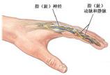 中医图解指趾再植手术